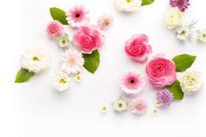 綺麗な花々